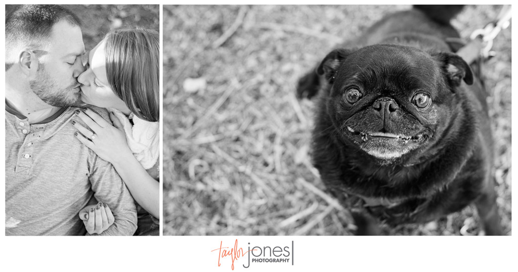 Jess, Jason, and their pug at spring engagement shoot in Denver, CO