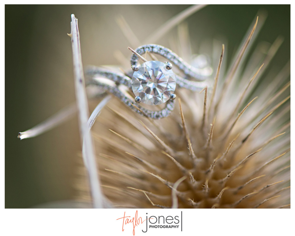Beautiful engagement ring on cat tails in Denver, Colorado. Nikon 105mm macro lens