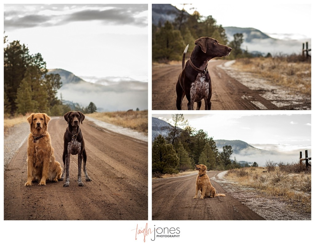 Our pups playing on a dirt road in South Fork Colorado