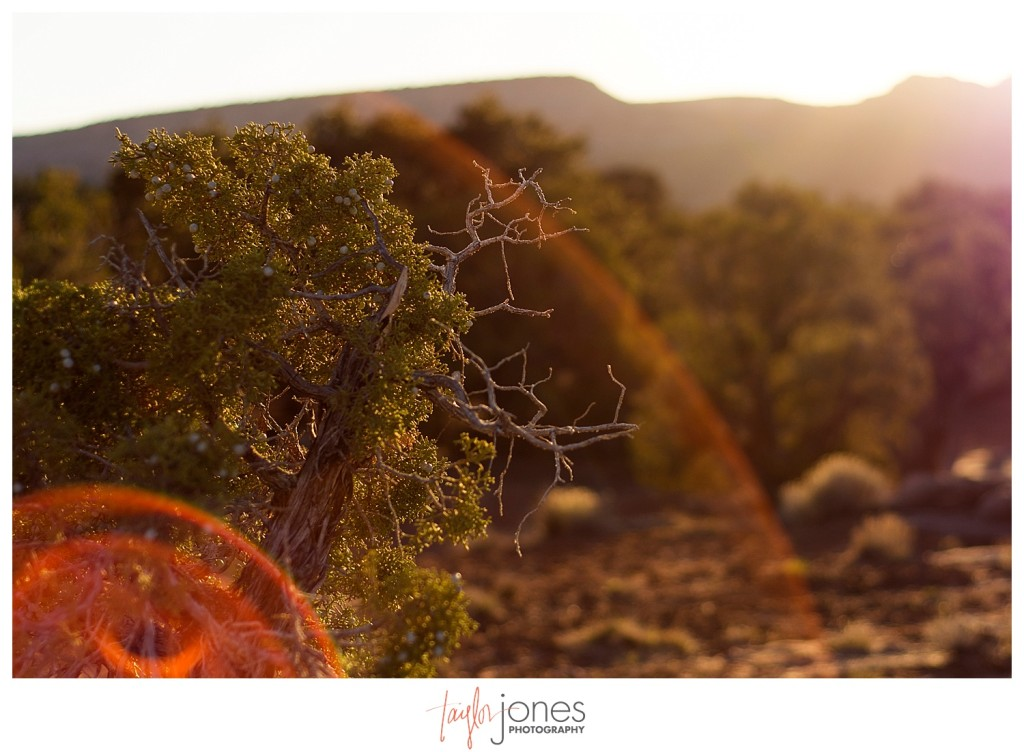 Sunset and a juniper tree in Moab, Utah