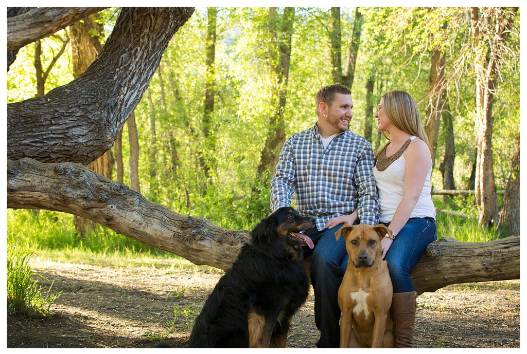 Colorado engagement shoot at Lair O the Bear couple in tree with dogs