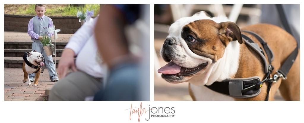 Bulldog Barley at Ceremony at Pines at Genesee wedding for Cortney and Matt
