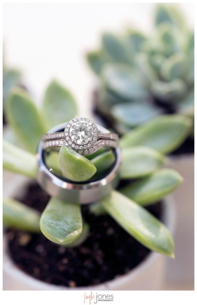 Della Terra Estes Park Wedding rings in succulents