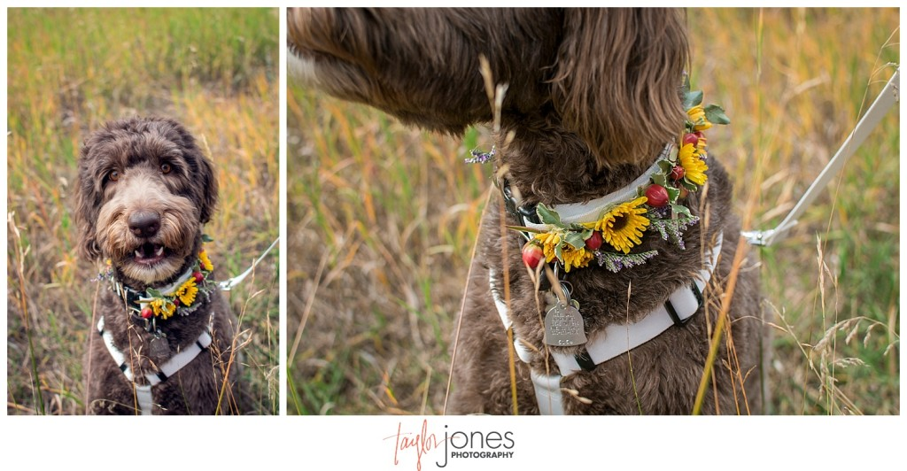 Mountain wedding bride portraits with dog in Pine, Colorado