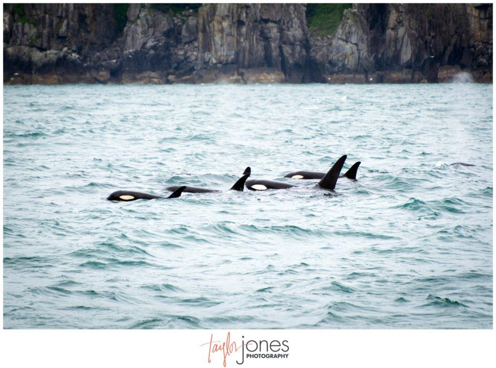 Kenai Fjords National Park orca sighting